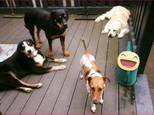Hunde auf der Terrasse (2)