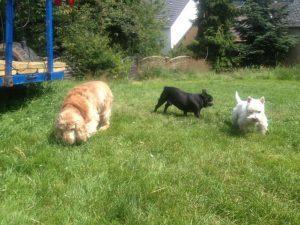 Hunde auf der großen Wiese neben Haus