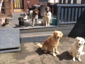 Hunde auf die Terrasse