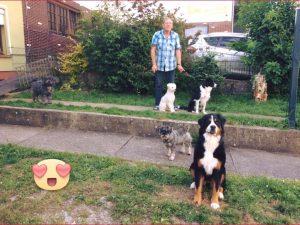 Hunde im Garten vorm Haus