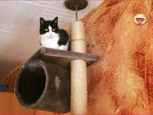 Katze aus Trier